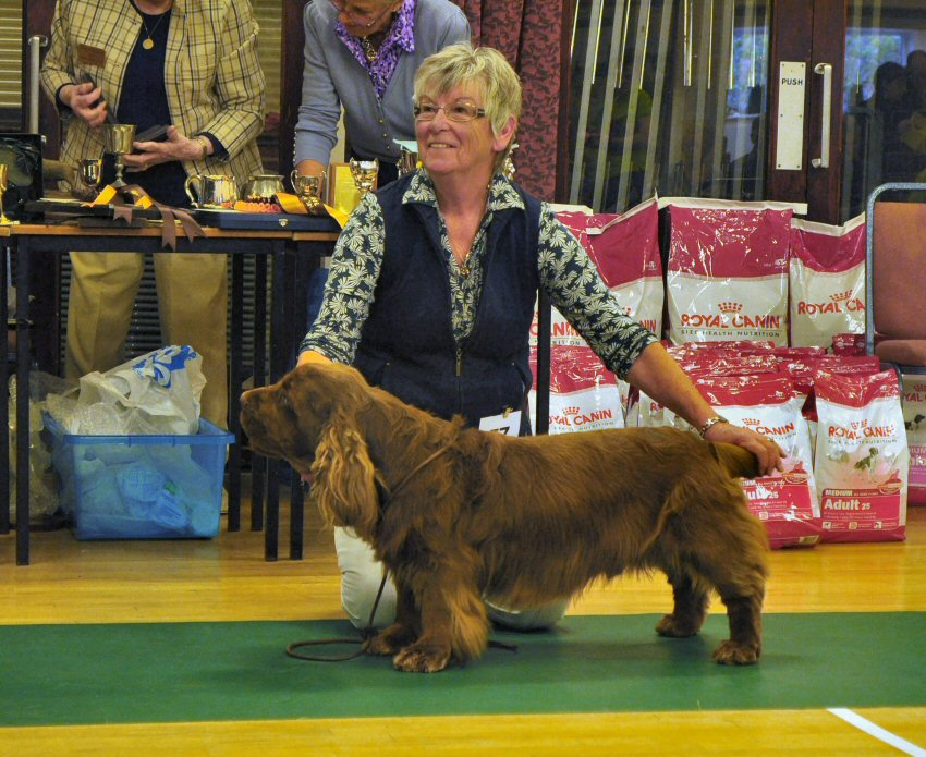 Photos of Latest Sussex Spaniel Show