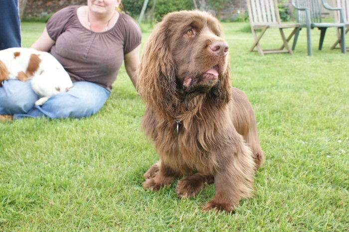 Photos of Latest Sussex Spaniel Fun Weekend