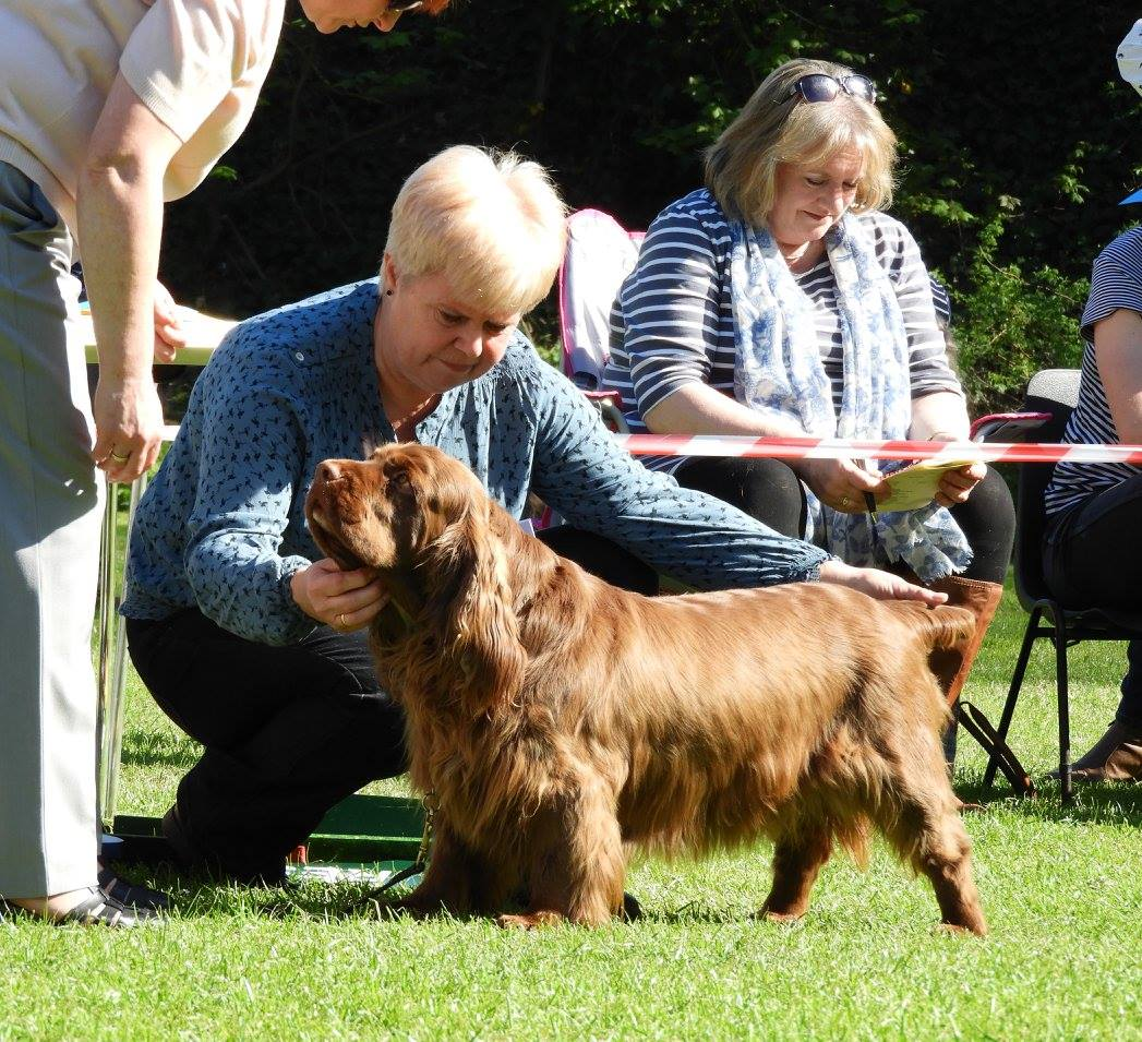 Photos of Sussex Spaniel Open Show 2012